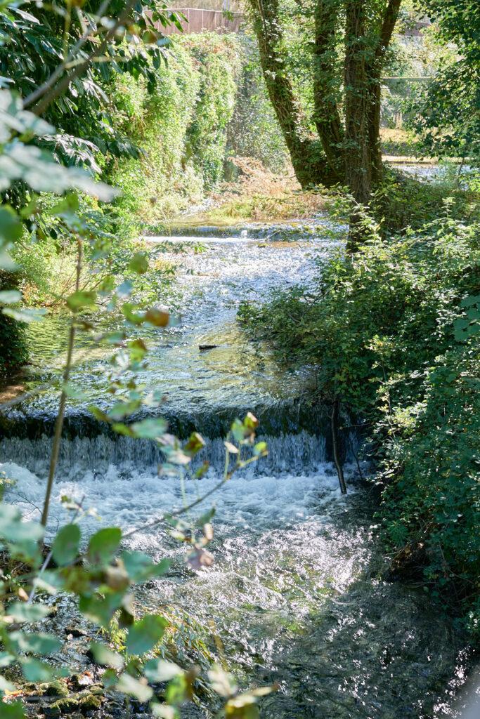Sorgenti del fiume verde 2